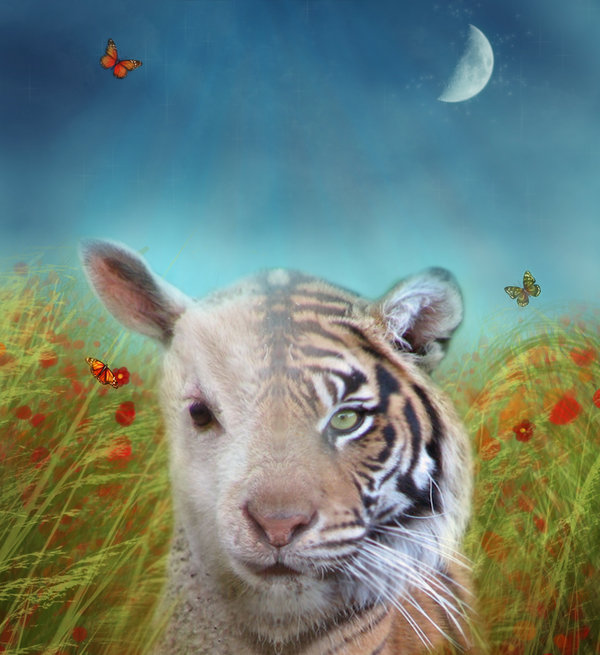 a comparison of similar themes in the lamb and the tiger by william blake Comparison of two poems: 'the tyger' and 'the  the lamb' because they both have similar themes but  the tiger and the lamb, poems by william blake.